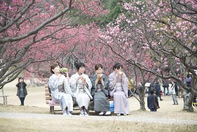 Japonesas vestidas com o tradicional Kimono, roupa japonesa apreciam os pés de ameixeiras do parque Minami da cidade de Okazaki no estado de Aichi no Japão. foto : Marcelo Hide/Fotos Públicas