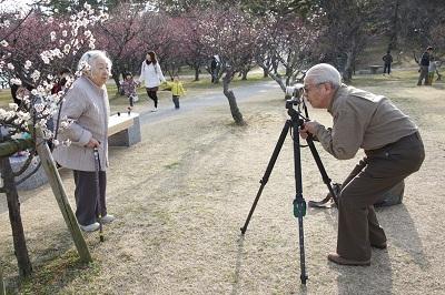 Casal de idosos fotografa junto a pés de ameixeiras no parque Minami da cidade de Okazaki no estado de Aichi no Japão. Foto : Marcelo Hide/Fotos Públicas.