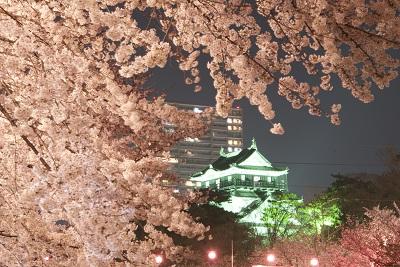 Cerejeiras iluminadas no castelo de Okazaki o estado de Aichi  no Japão. Fito : Marcelo Hide/Fotos Públicas