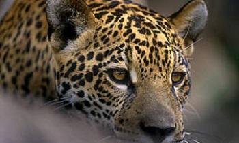 FOTO: WWF/DIVULGAÇÃO