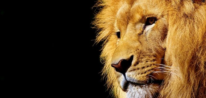 CANNES LIONS 2018: PNUD, FINCH E MARS SE UNEM PELA VIDA SELVAGEM